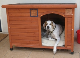 Roxy's kennel is embellished with Cave Canem & Fine Dog in Canberra (Australia)